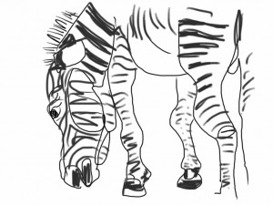 zebra, iPad sketch